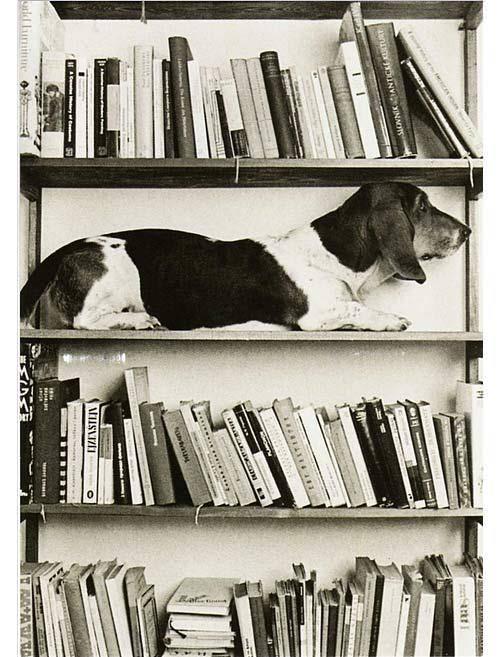 Chien Bibliothèque