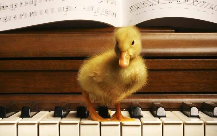 Canard Piano