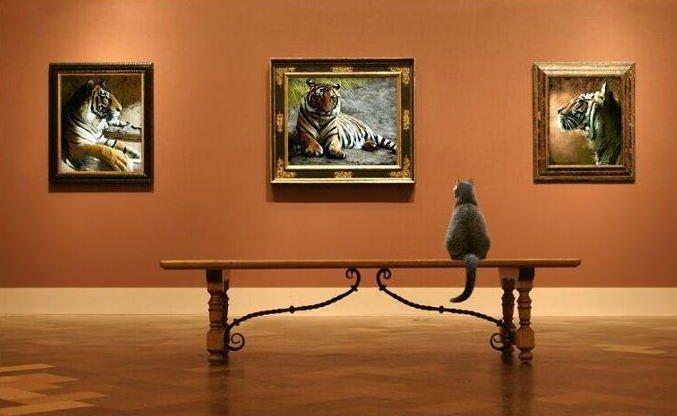 Chat dans un musée