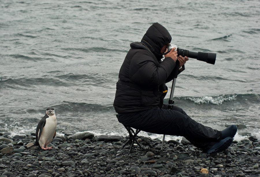 Animal et photographe