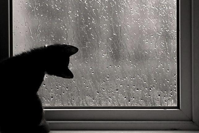 Chat et pluie