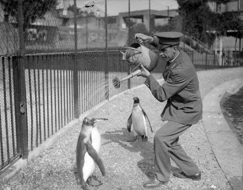 Pingouins et arrosoir