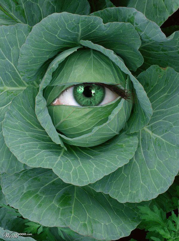Oeil et salade
