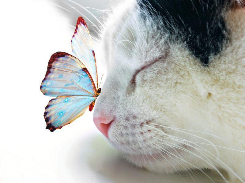 Papillon et chat