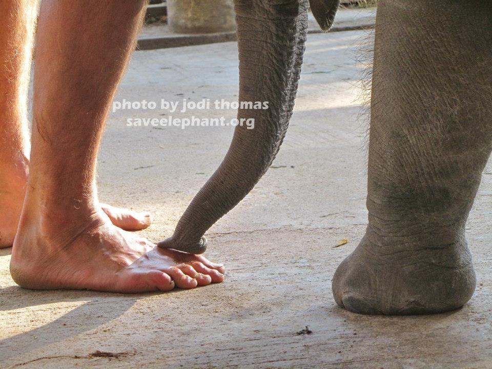 Elephant Nature Foundation