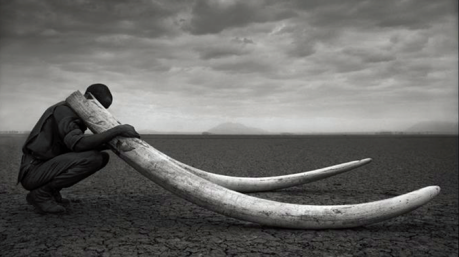 Sauvegarde éléphants