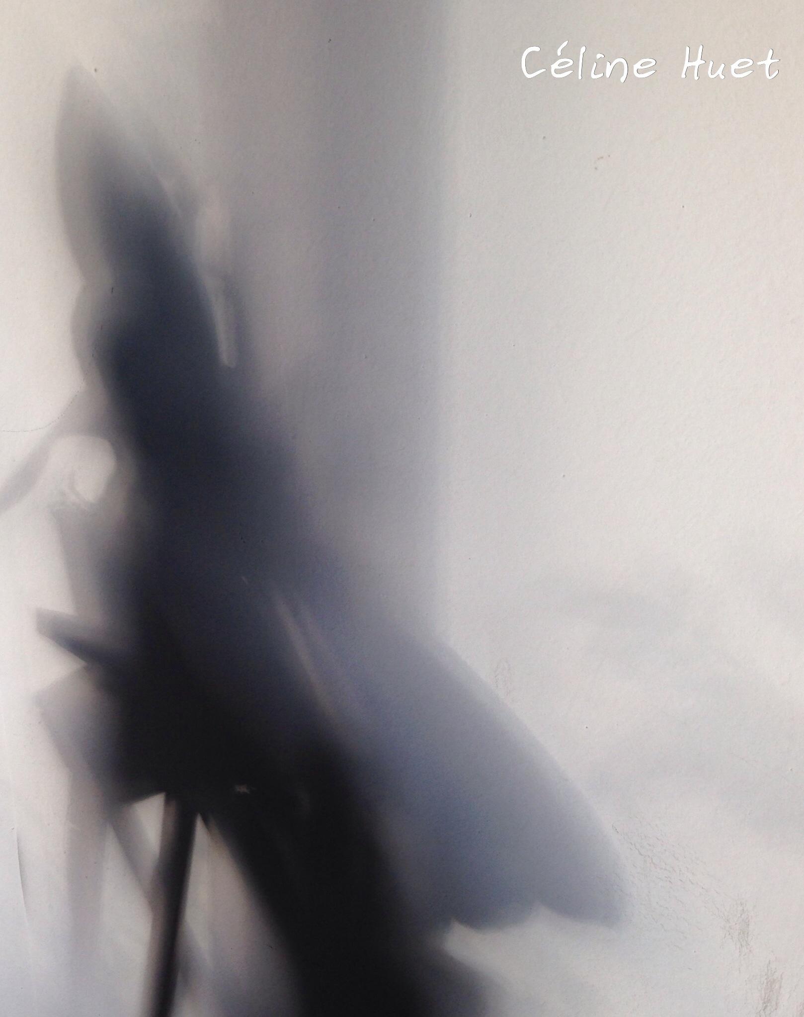 """""""Il n'y a pas de lumière sans ombre"""" (Louis Aragon)..."""