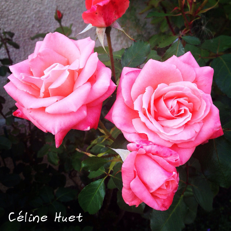 """""""Le monde fleurit par ceux qui cèdent à la tentation"""" (Julien Gracq)..."""