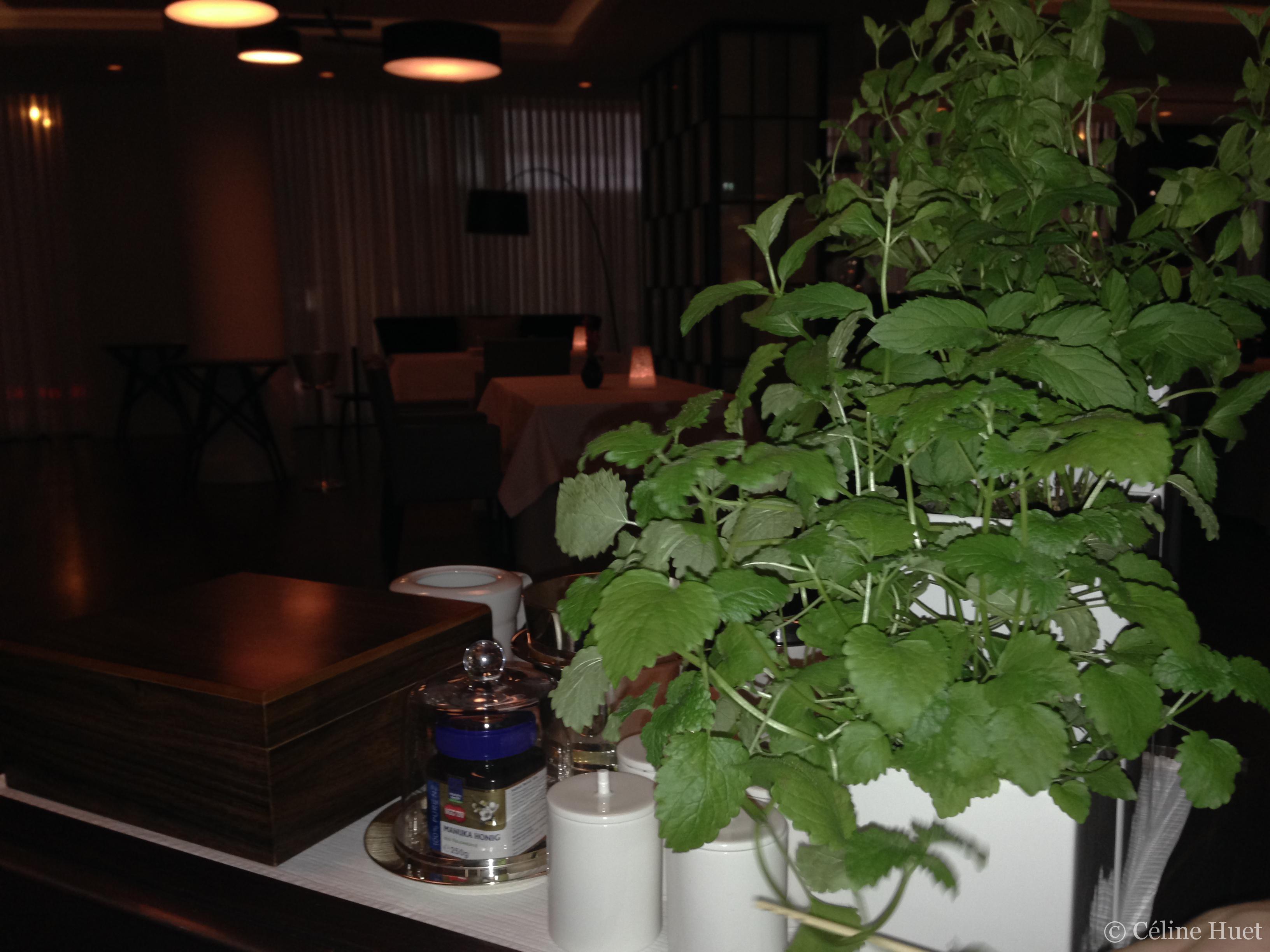 Infusion naturelle Waldorf Astoria Berlin Allemagne