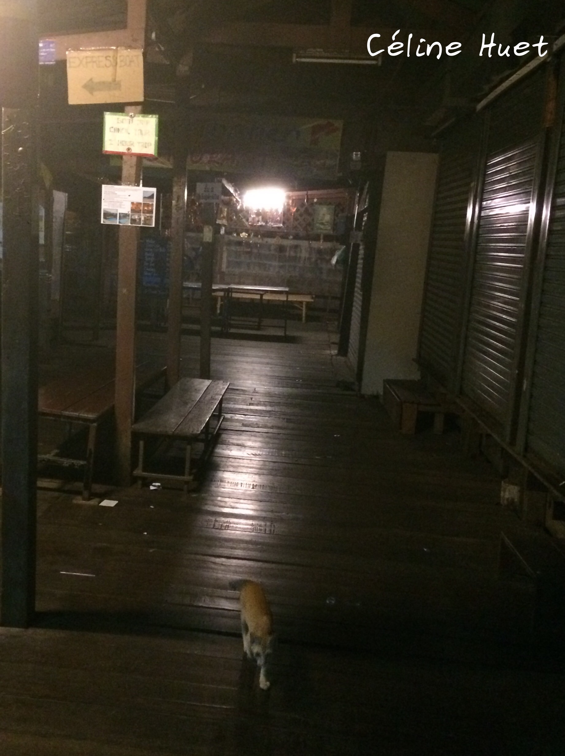 The little cat of Tha Tien Pier by night Bangkok Thailand Asia