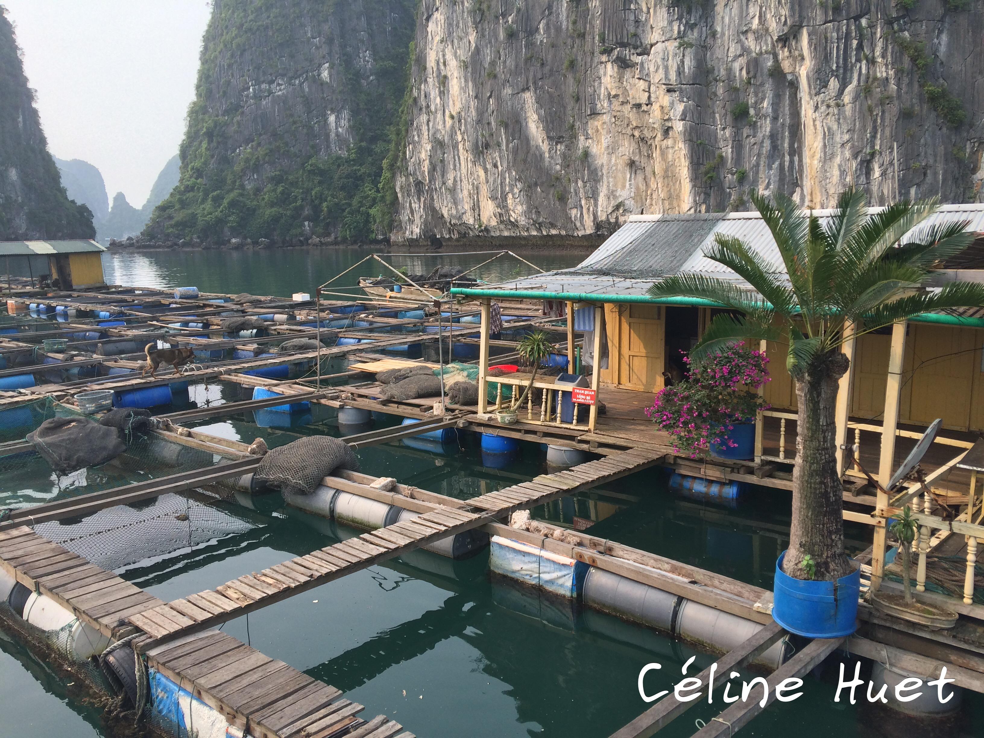 Pisciculture Baie d'Halong Vietnam Asie
