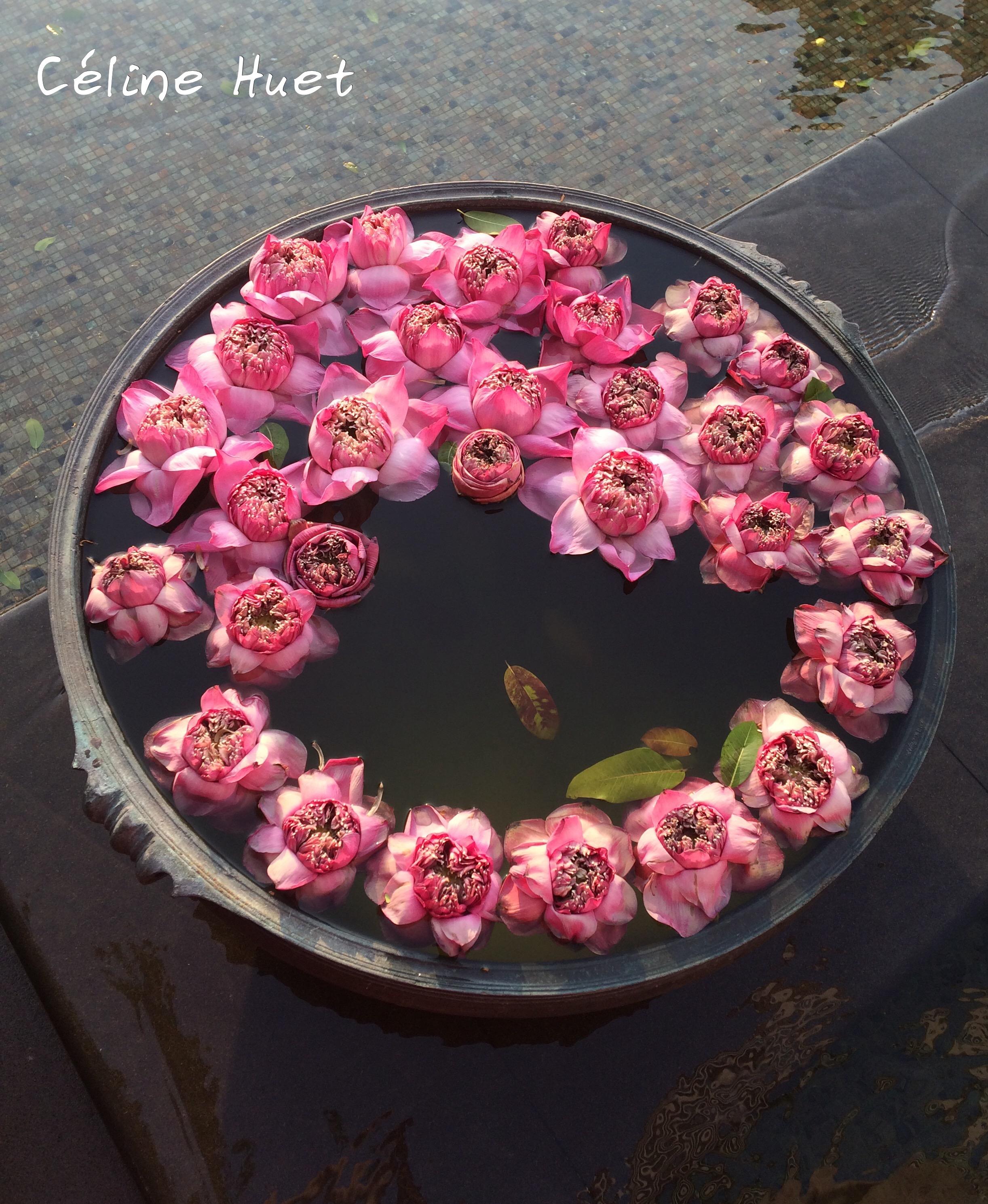 Fleurs de lotus Mandarin Oriental Bangkok Thaïlande Asie