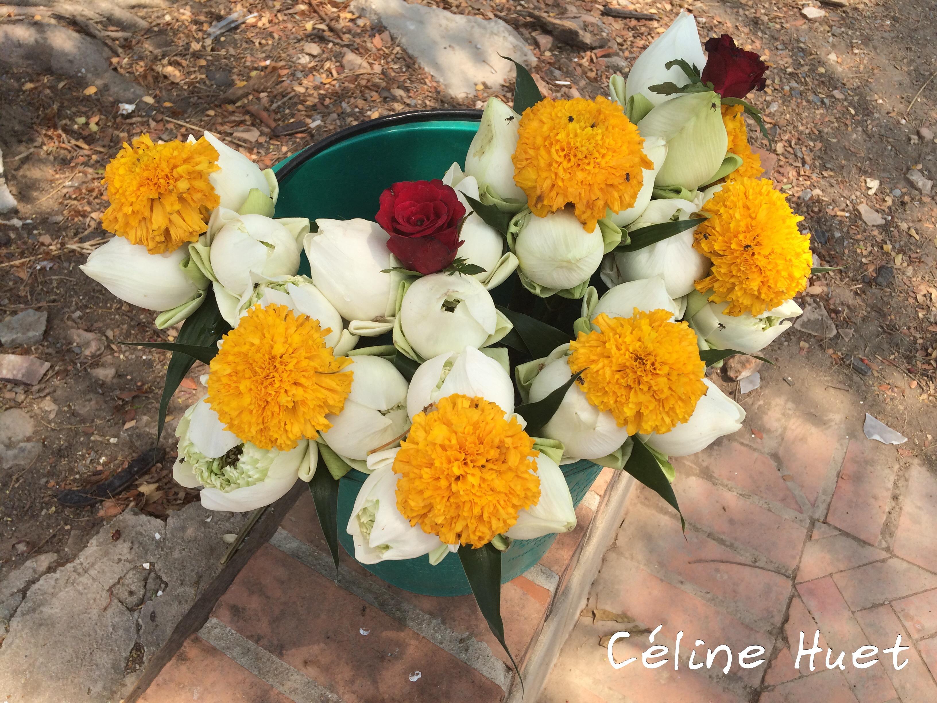 Fleurs de lotus Ayutthaya Thaïlande Asie
