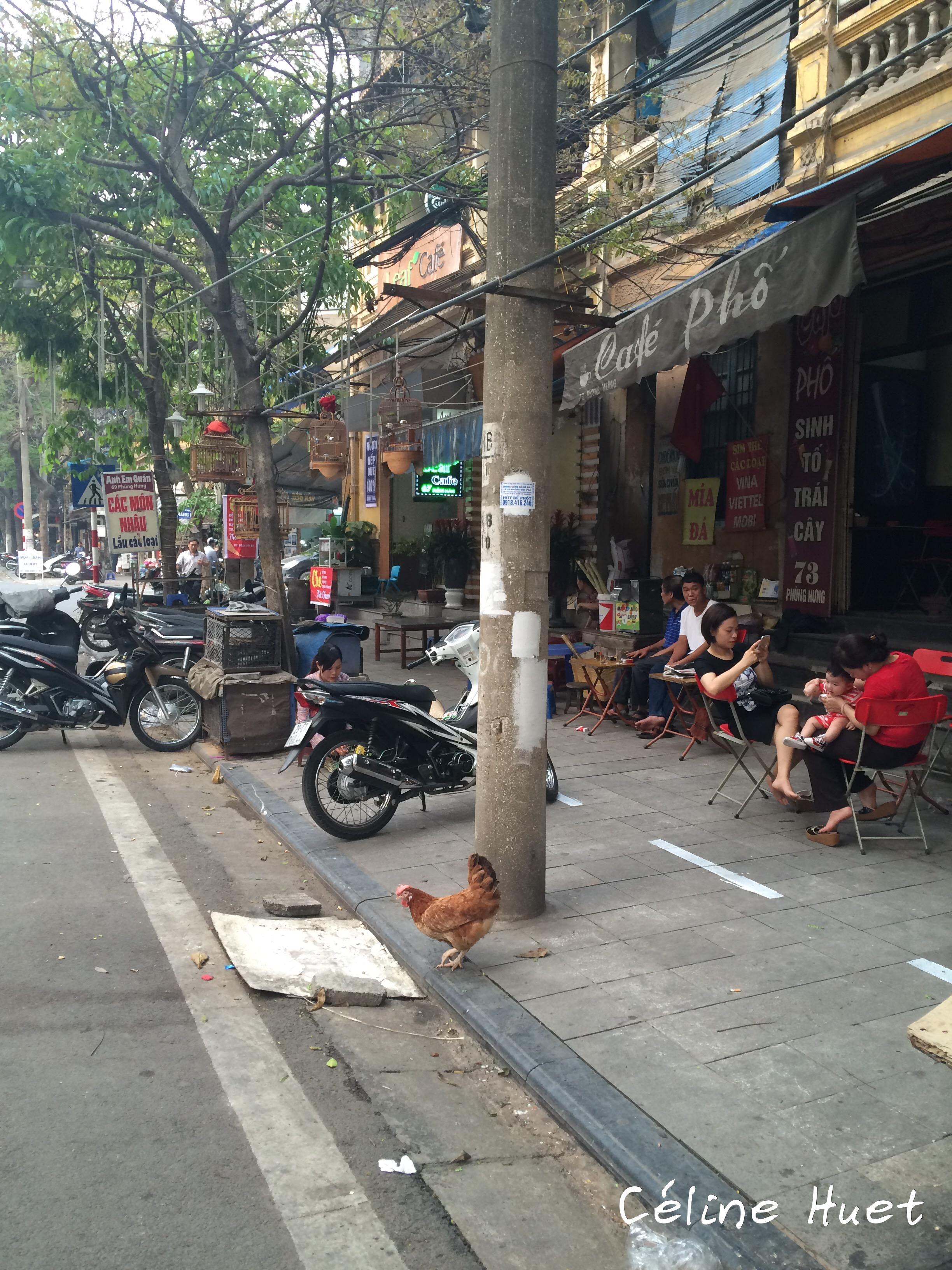 Coq dans la rue Hanoï Vietnam Asie