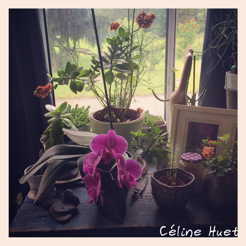 Le coin des plantes