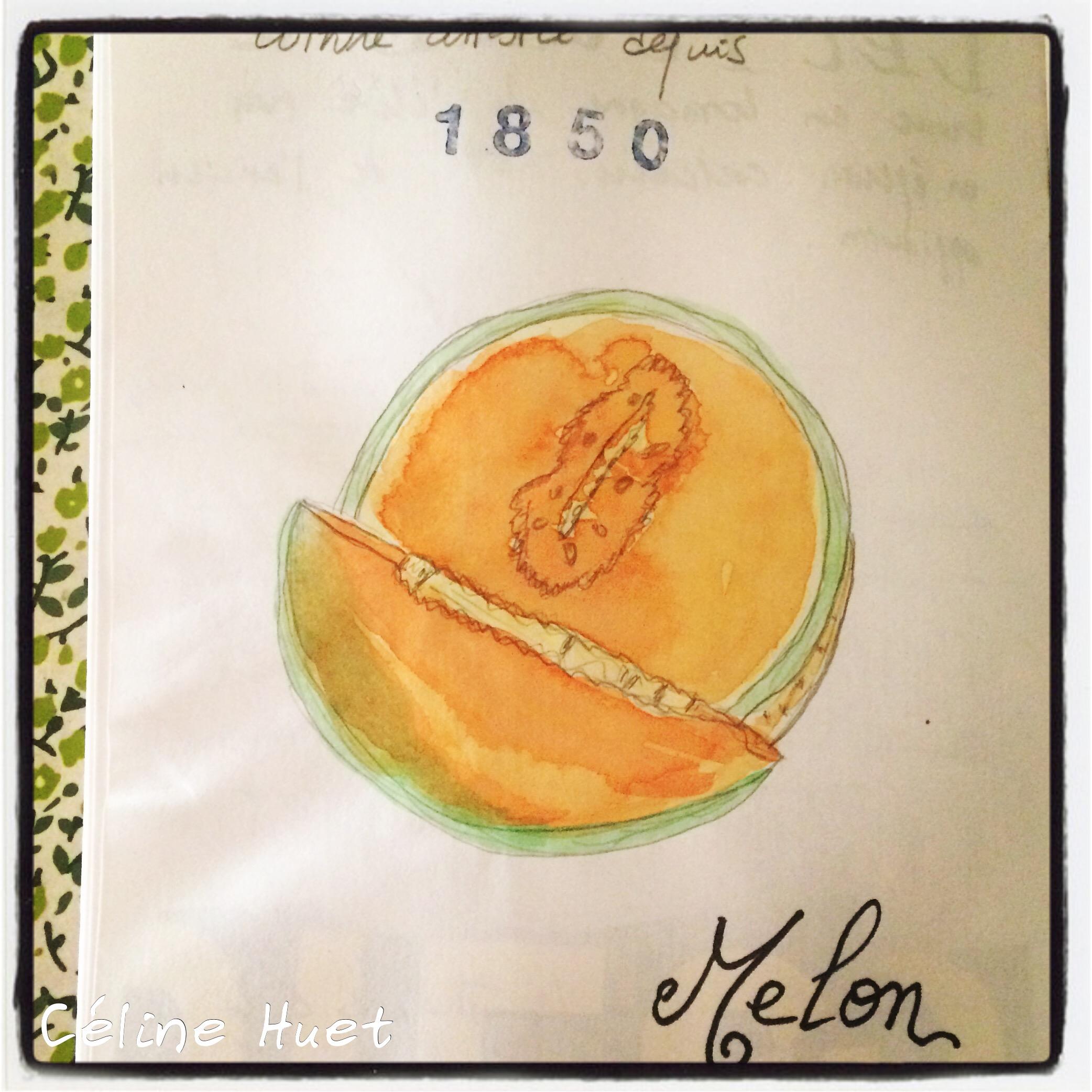 Melon de Lectoure Gers Gascogne France