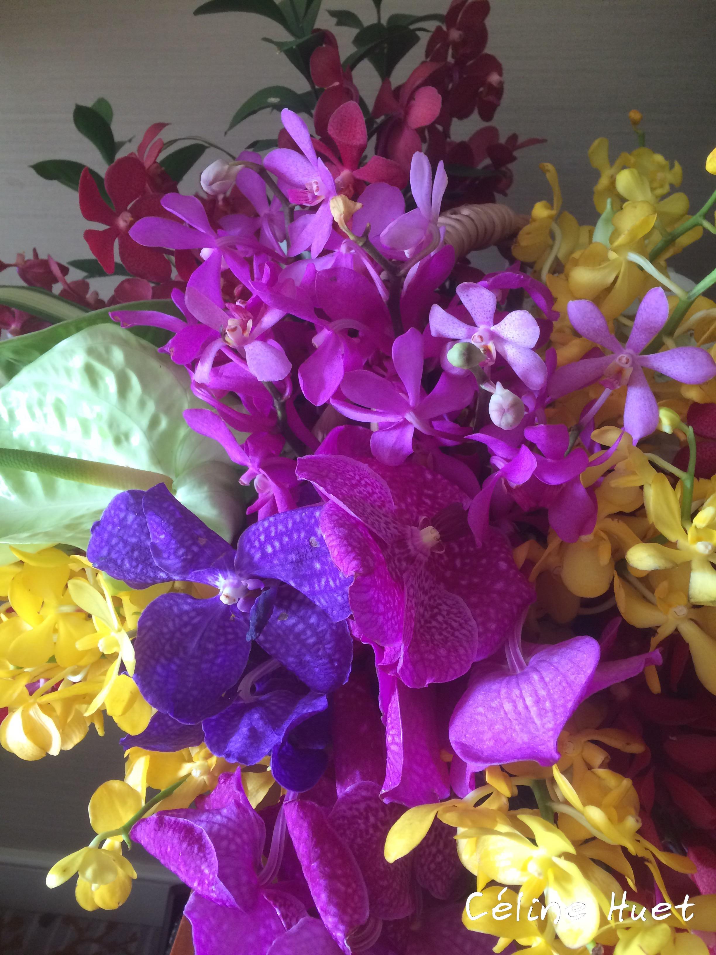 Orchidées de la part de la Gouvernante dans notre chambre Mandarin Oriental Bangkok Thaïlande Asie