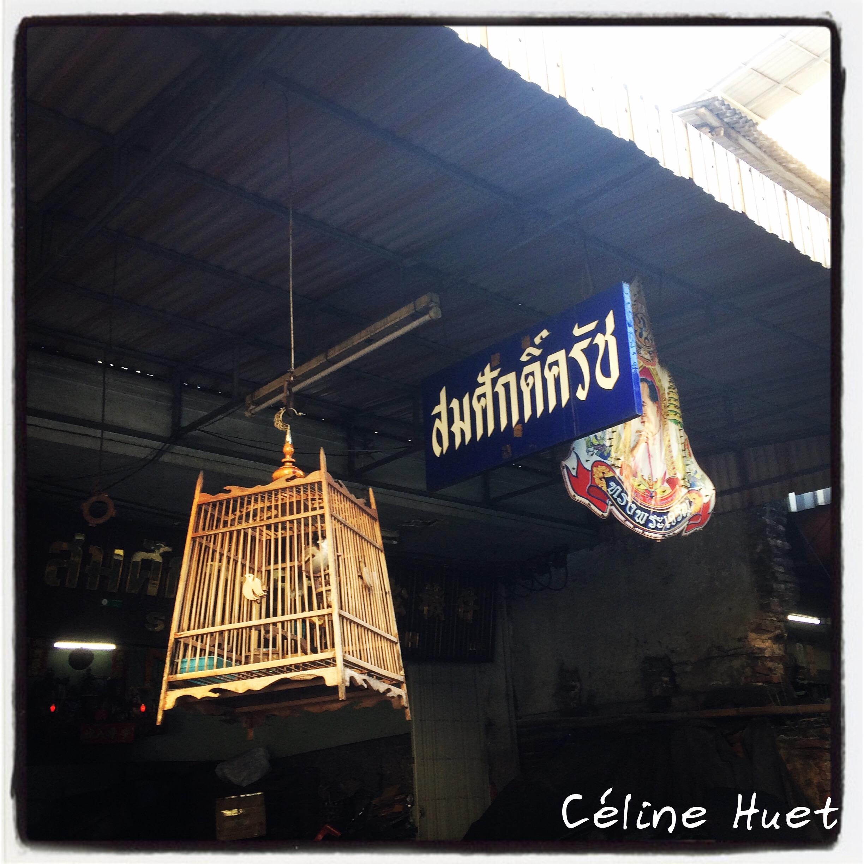Oiseau porte bonheur dans les rues de Bangkok Thaïlande Asie
