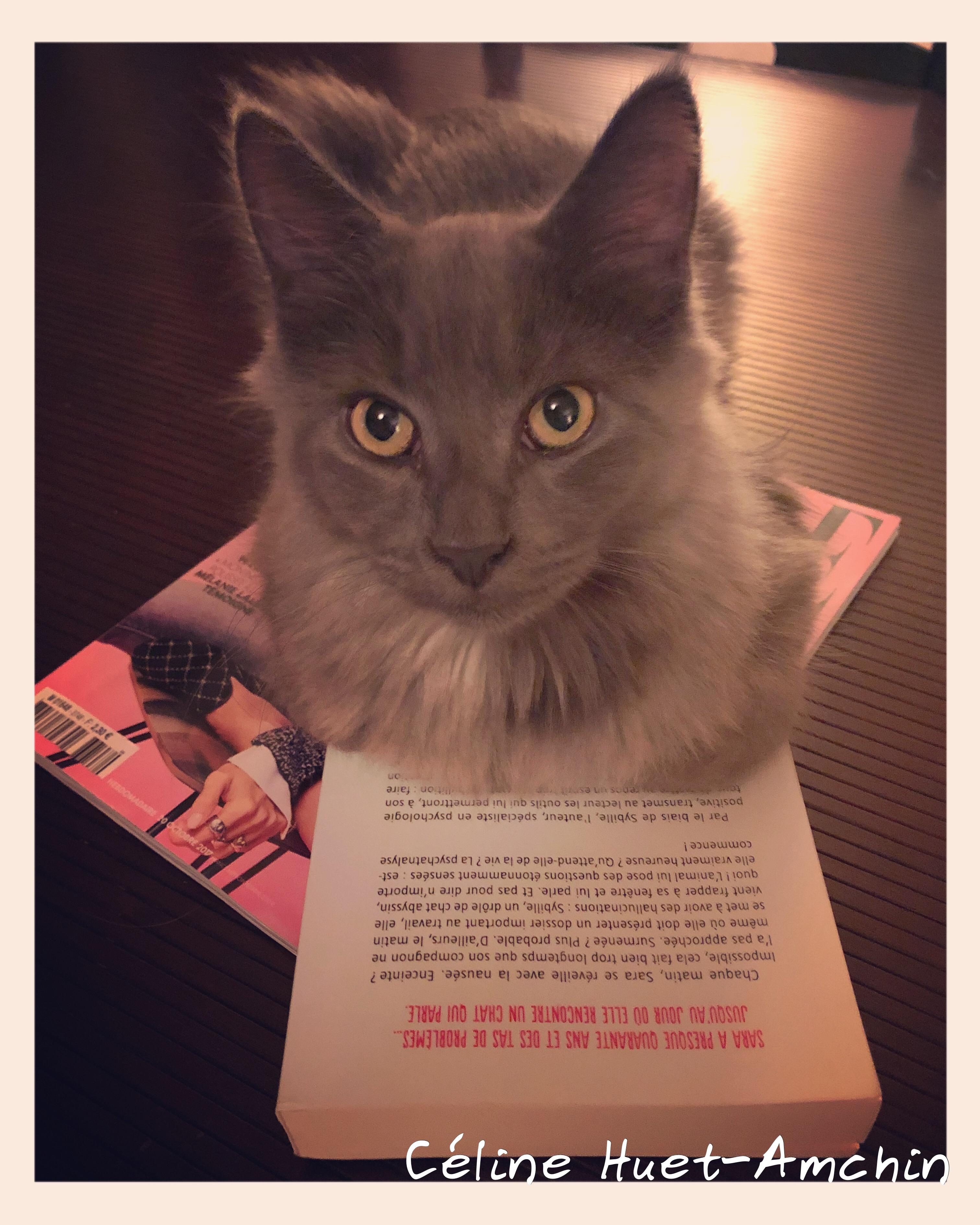 Nabuchodonosor et Conversations avec mon chat Eduardo Jauregui Editions Presses de la Cité