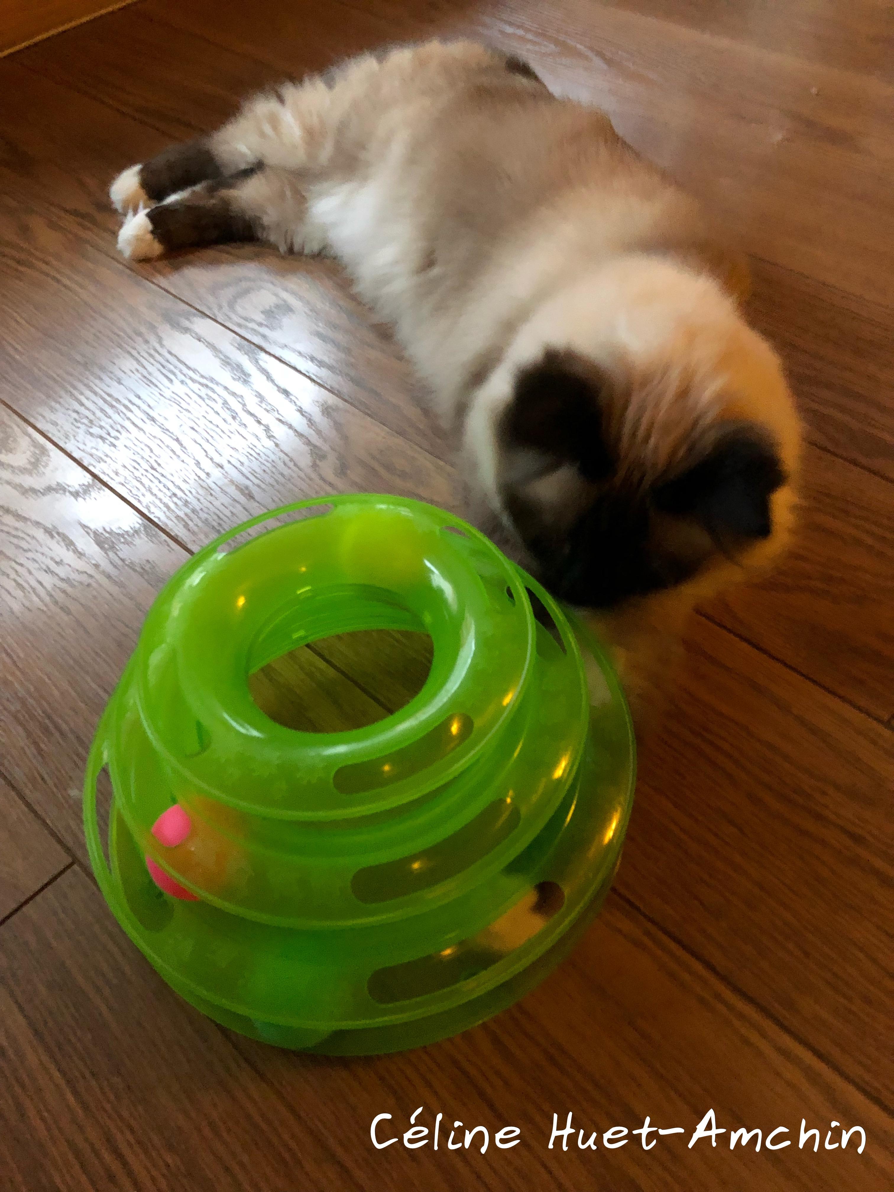 Jeu labyrinthe Zuoao pour chat