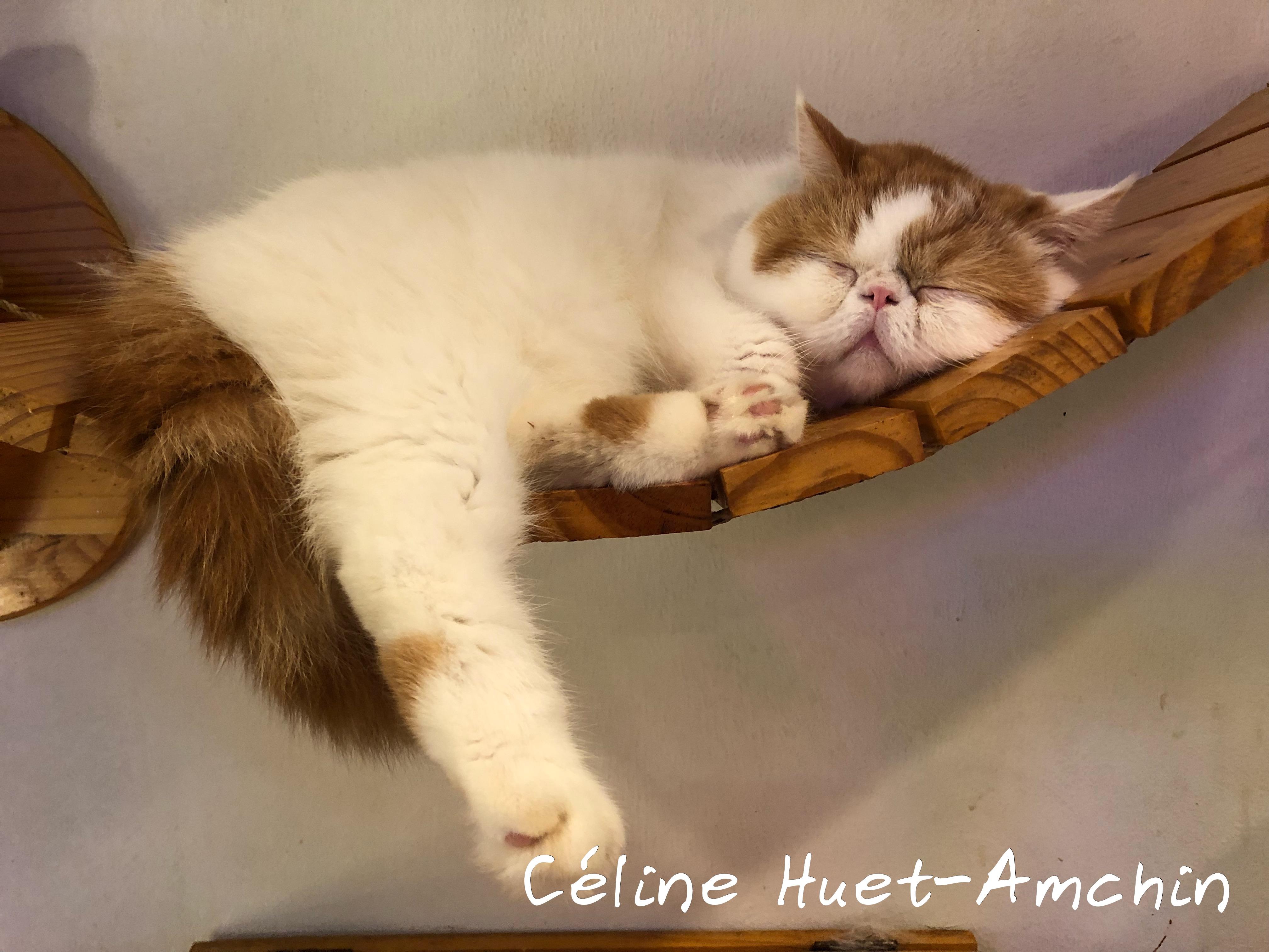 Caturday Cat Café Bangkok Thaïlande Asie