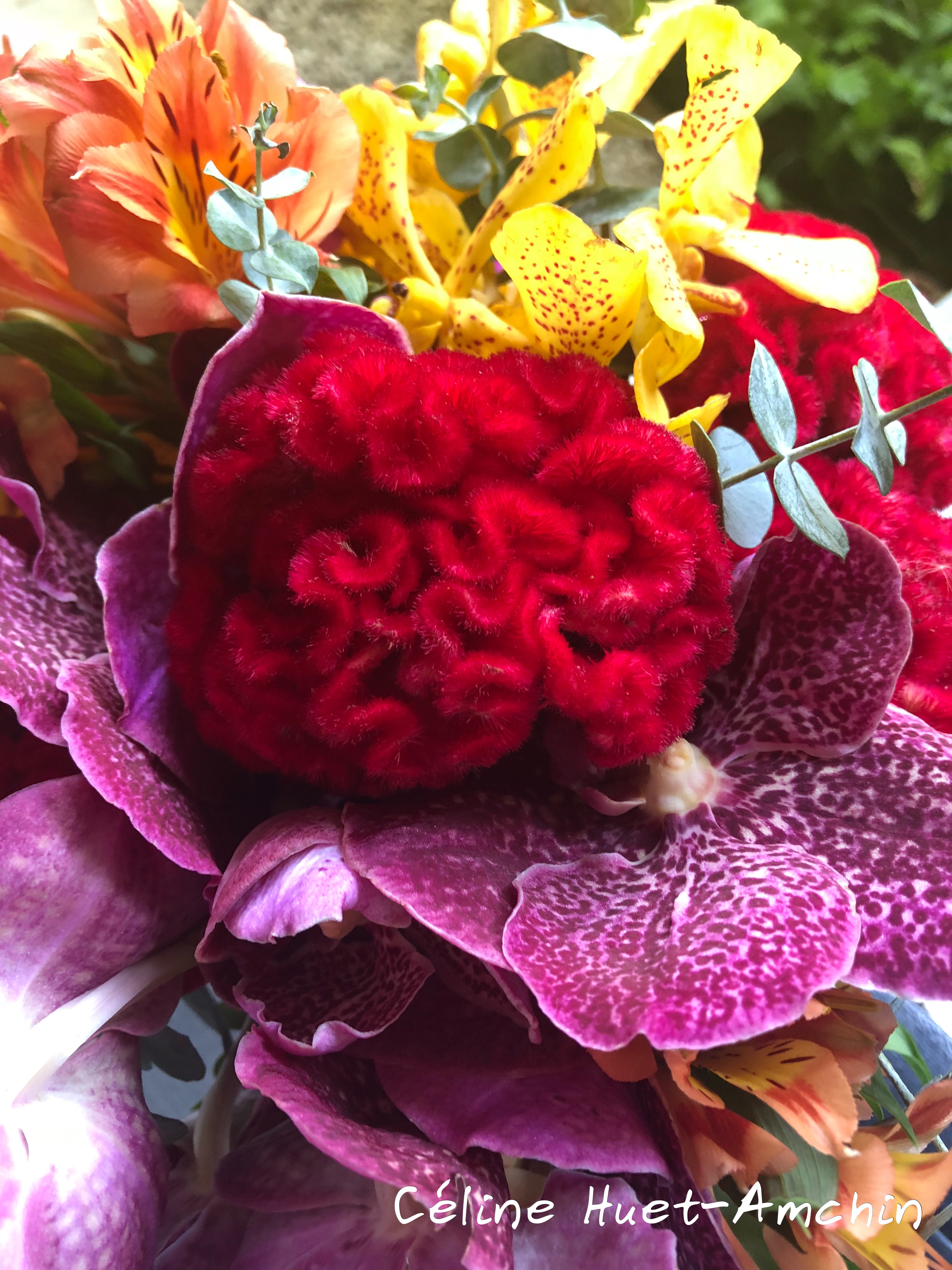 Fleurs Bangkok Thaïlande Asie