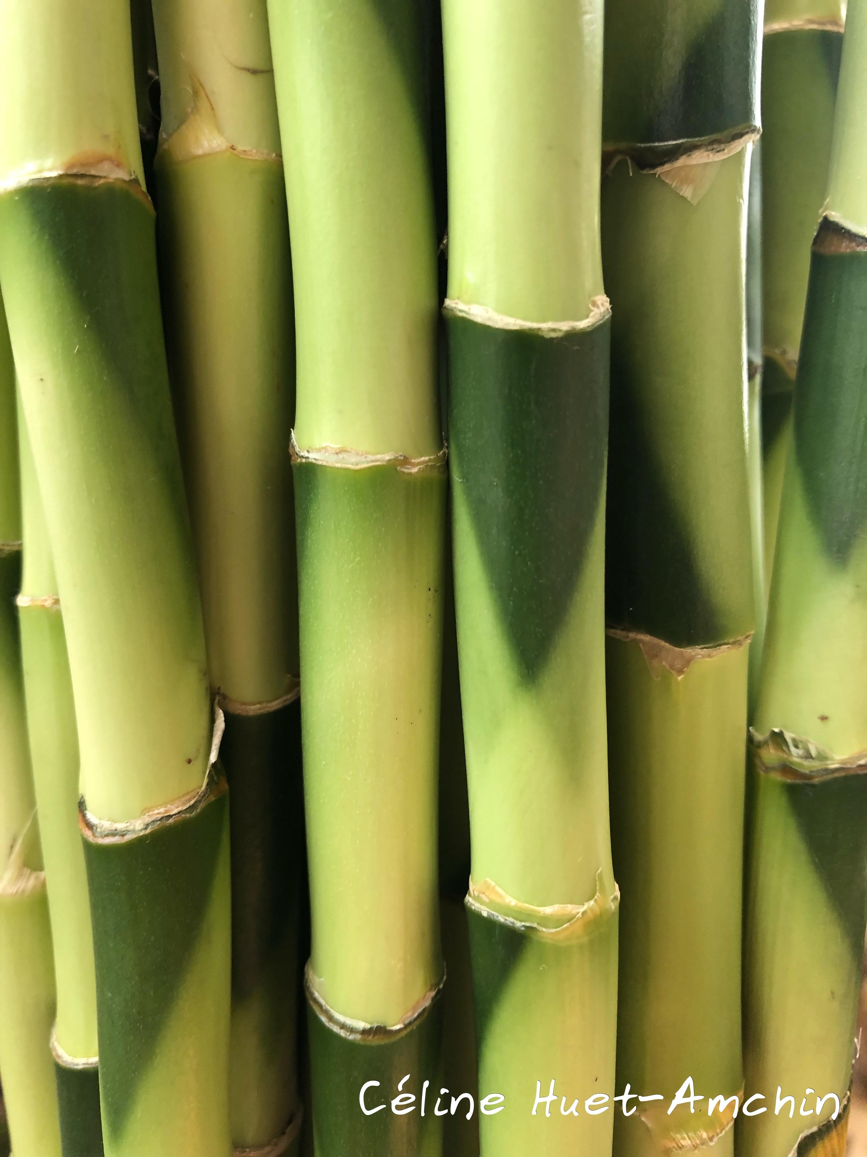 Bambou Mandarin Oriental Bangkok Thaïlande Asie