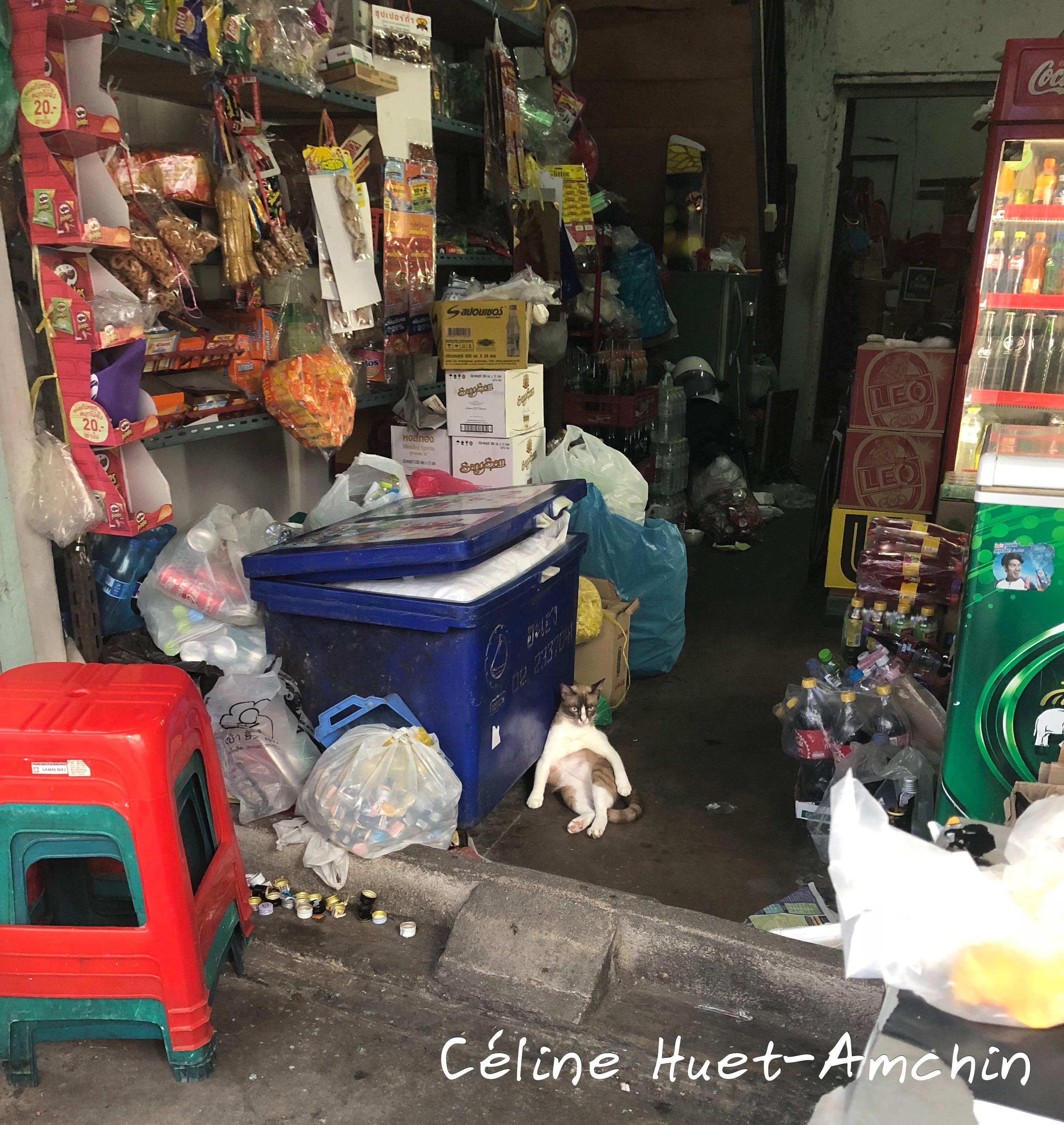 Chat Bangkok Thaïlande Asie