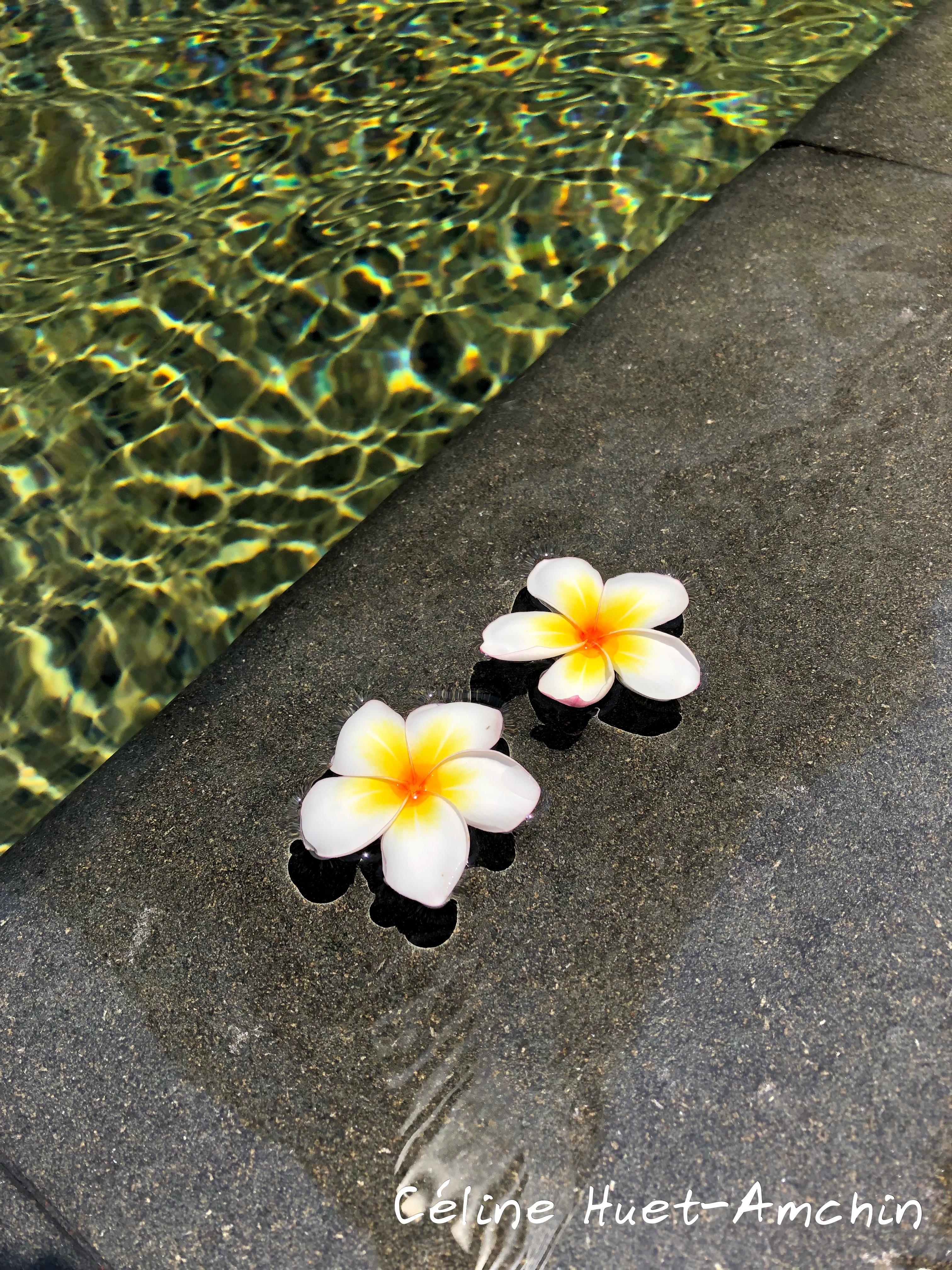 Fleurs de frangipanier Mandarin Oriental Bangkok Thaïlande Asie