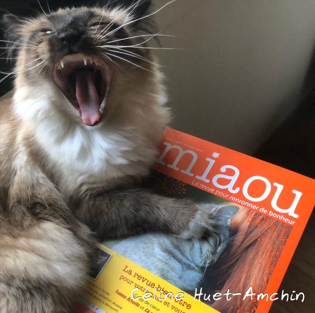 Miaou la revue n° 3