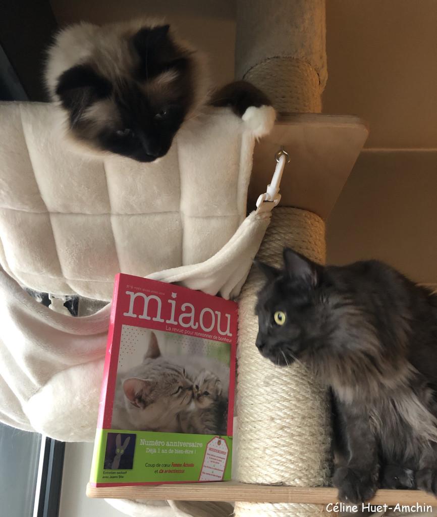 Miaou la revue n° 5 1 an