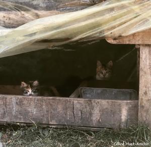 Les p'tits chats sauvages Le Perche France