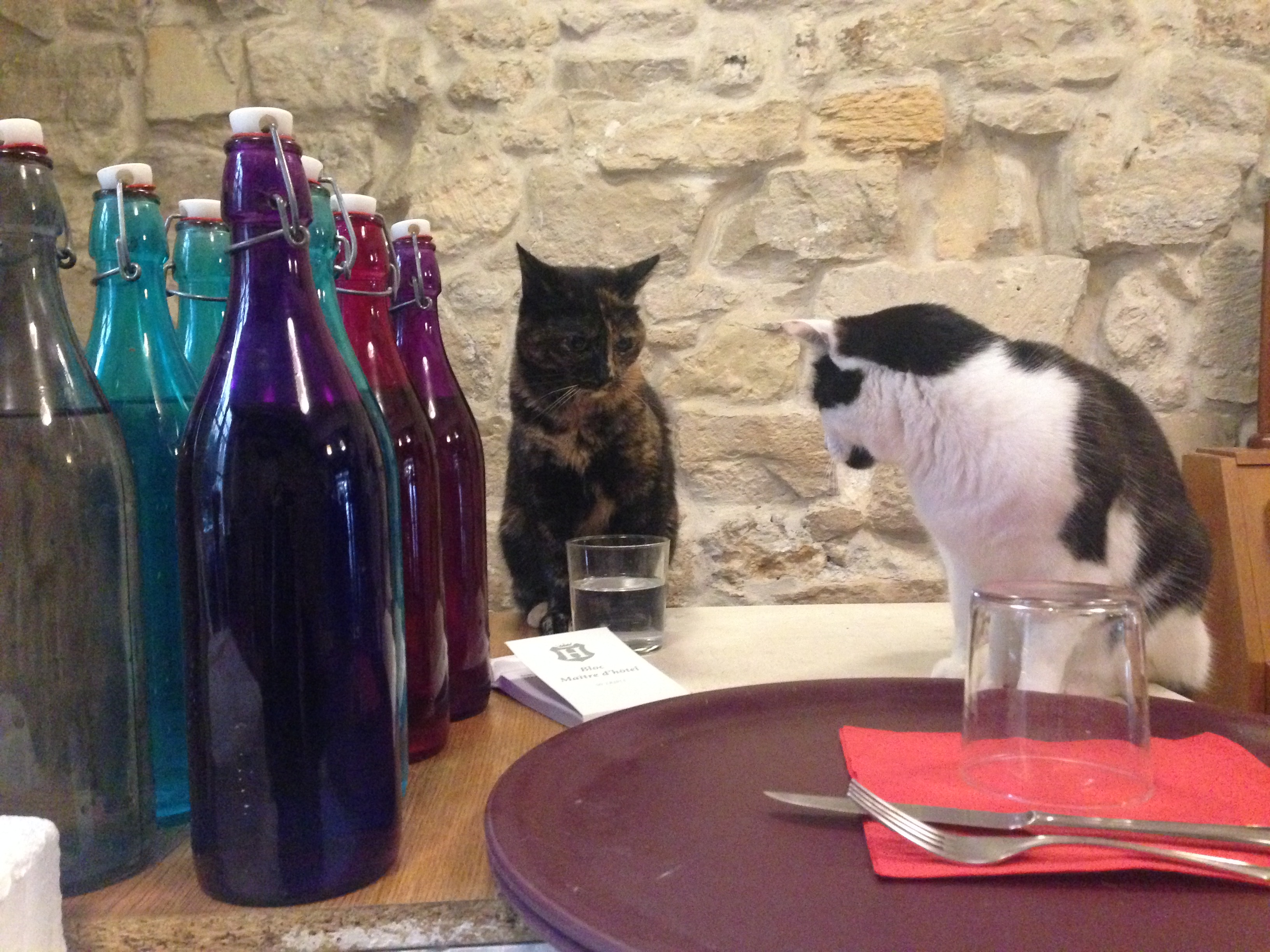 Le Café des Chats Paris 4 2015 (fermé depuis)