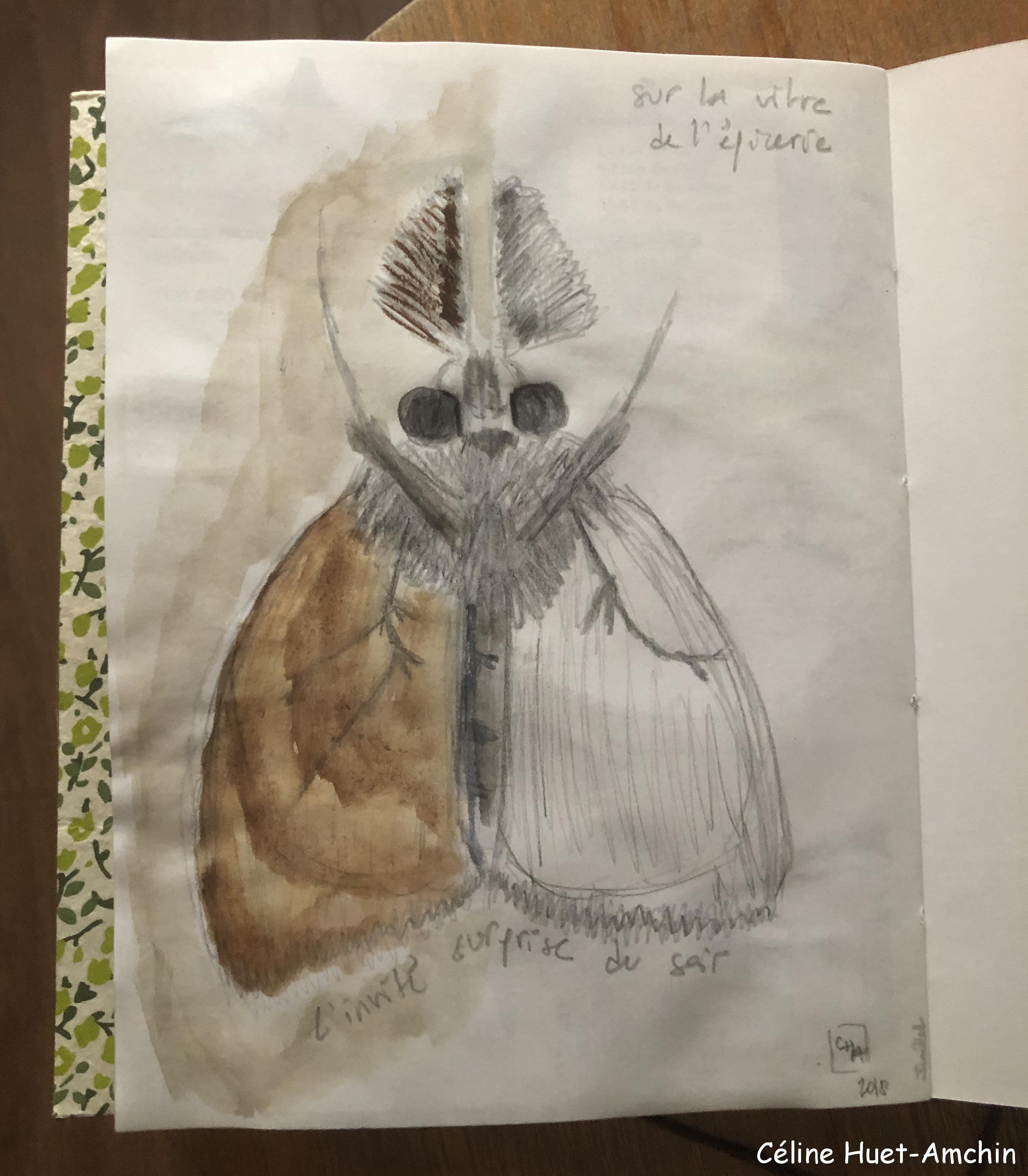 Aquarelle Papillon création Céline Huet-Amchin