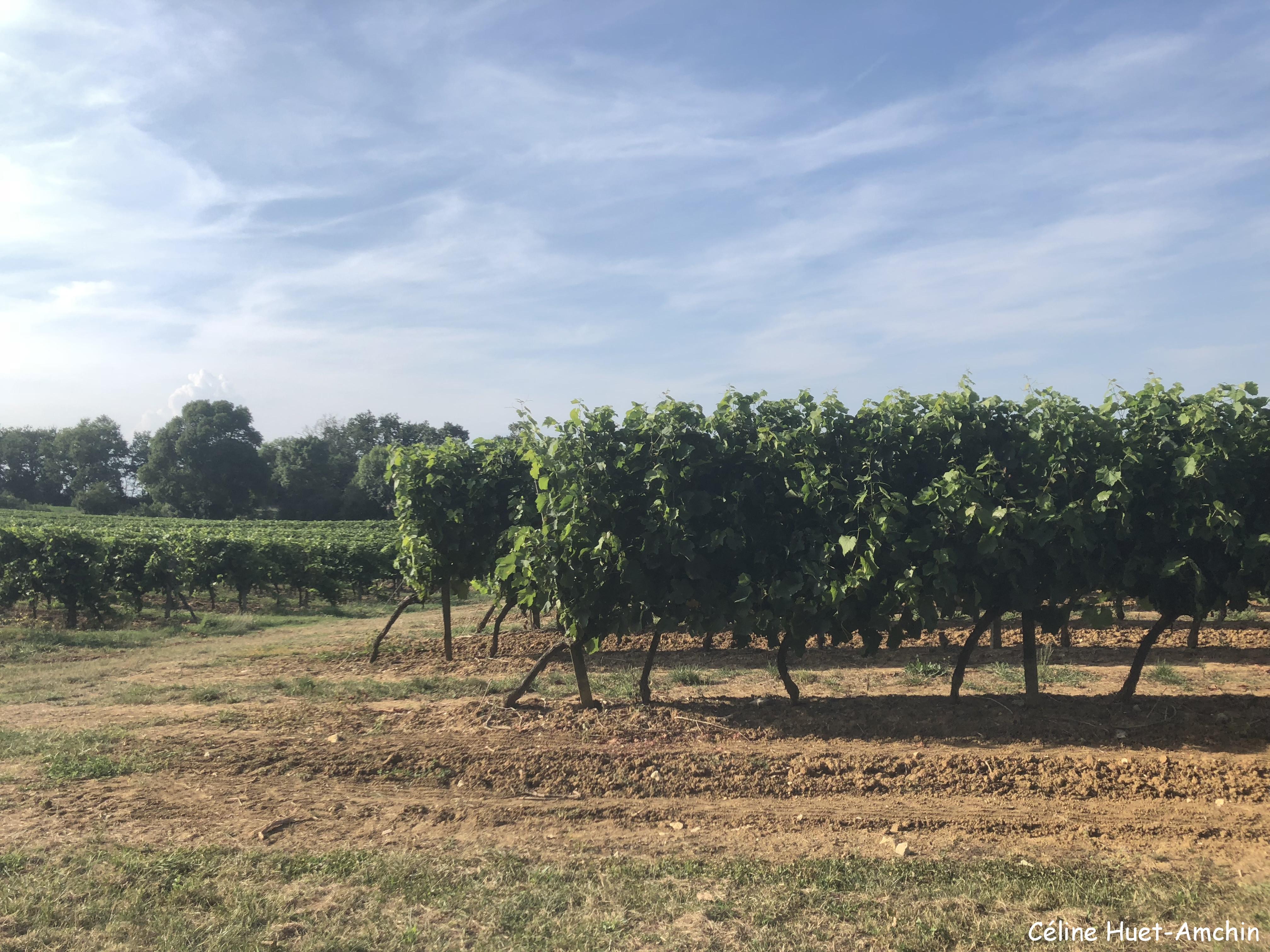 Vignes Gers France