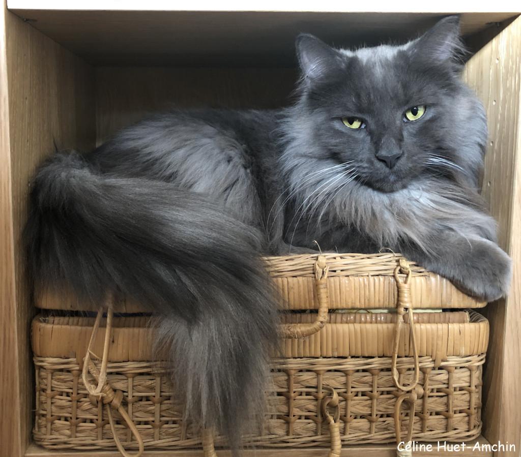 """""""Il n'y a pas besoin de sculpture dans une maison où il y a un chat."""" (Wesley Bates)..."""