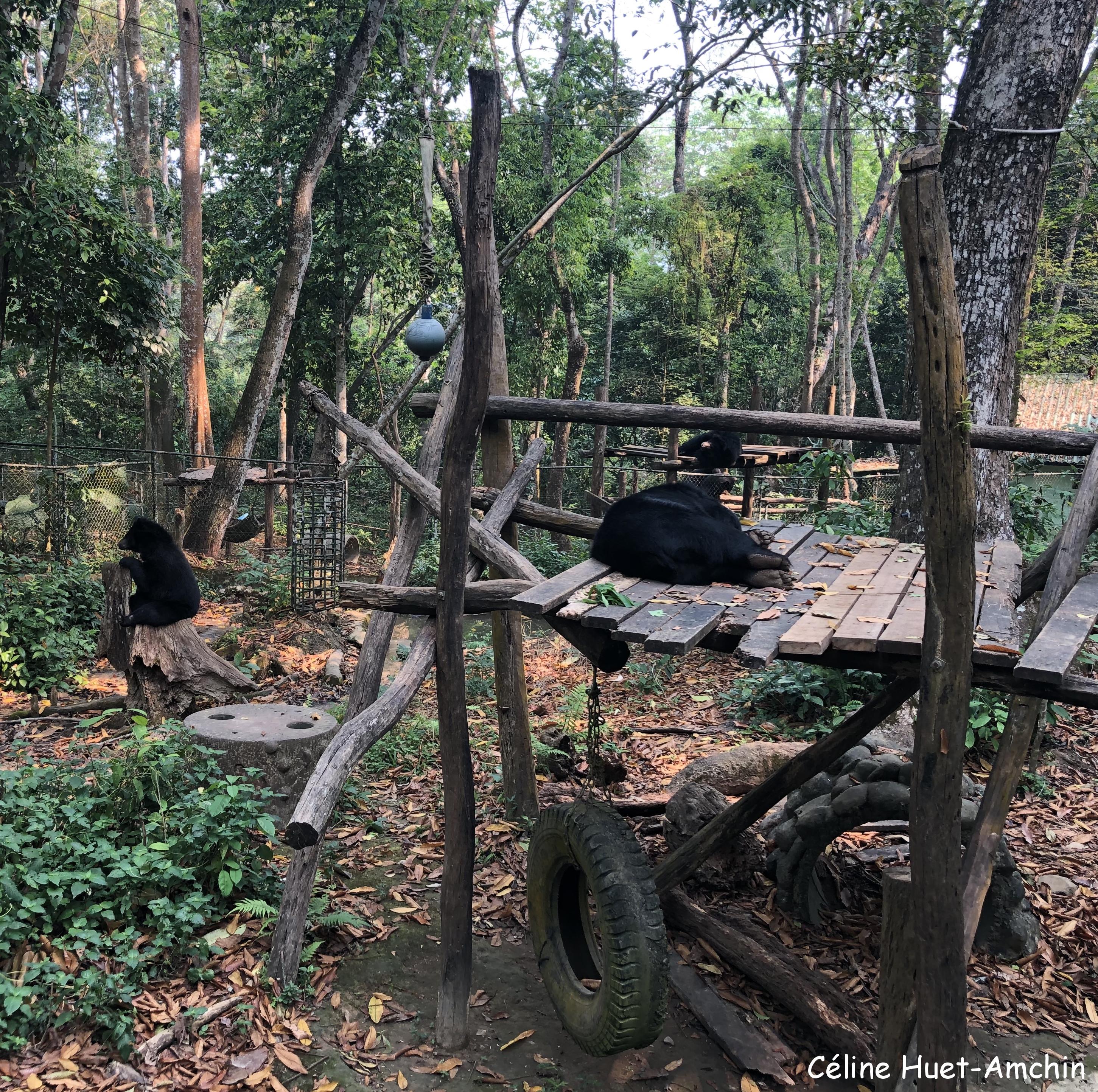 Centre de conservation des ours bruns d'Asie Kuang Si Laos