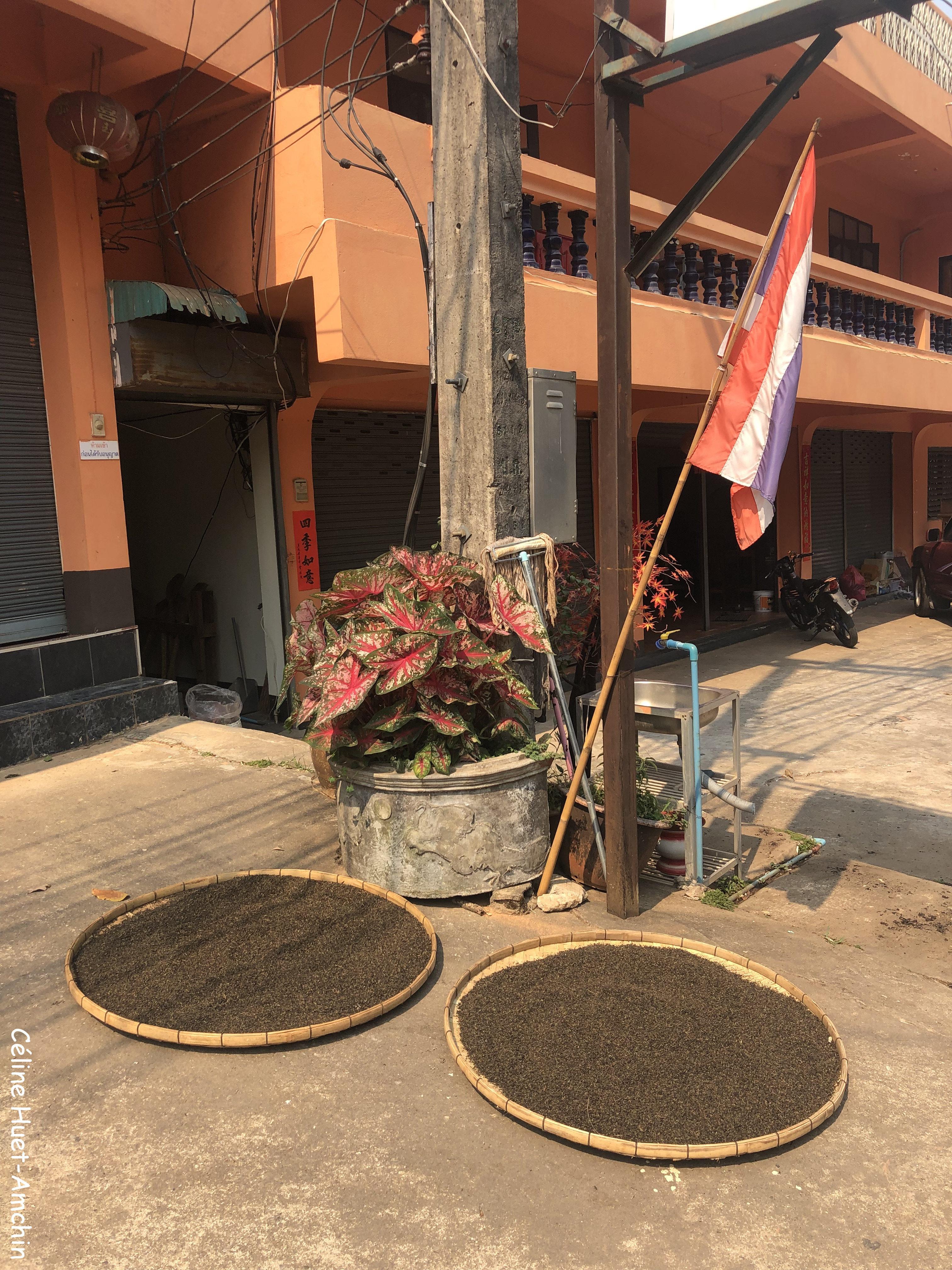 Thé Doi Mae Salong Thaïlande Asie