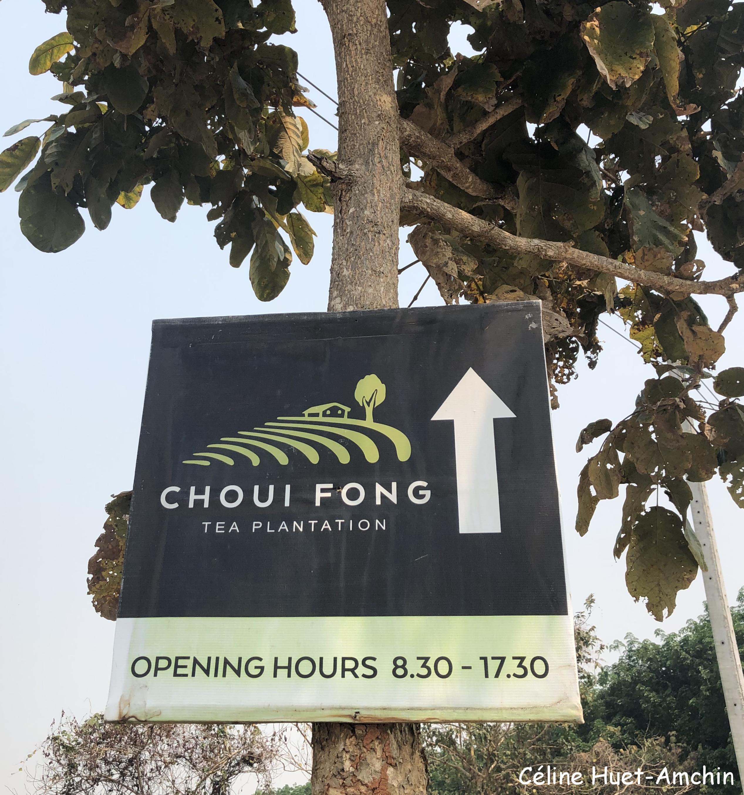 Choui Fong Tea Plantation Mae Chan Chiang Rai Thaïlande Asie