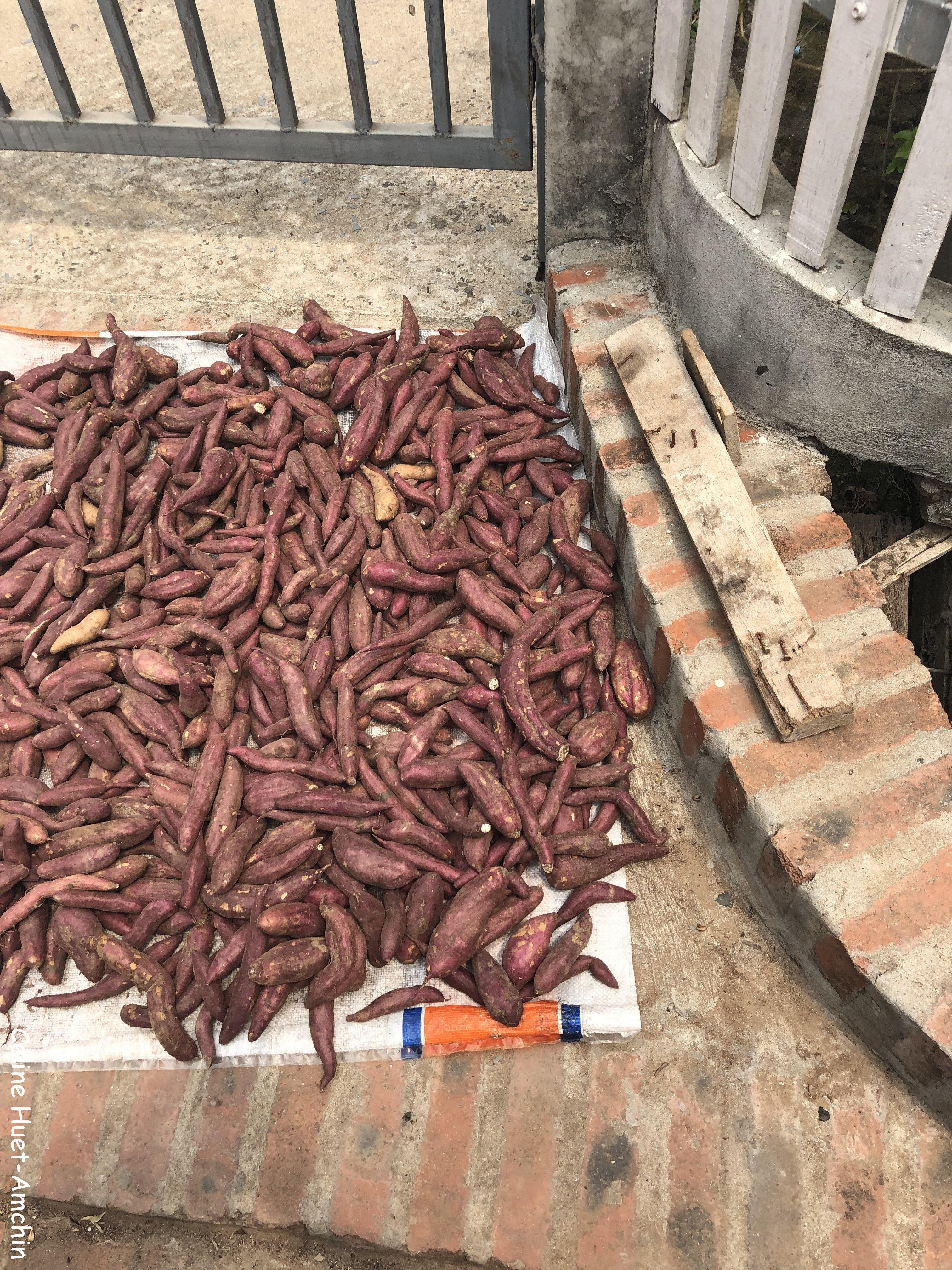 Légumes qui sèchent au soleil Luang Prabang Laos Asie