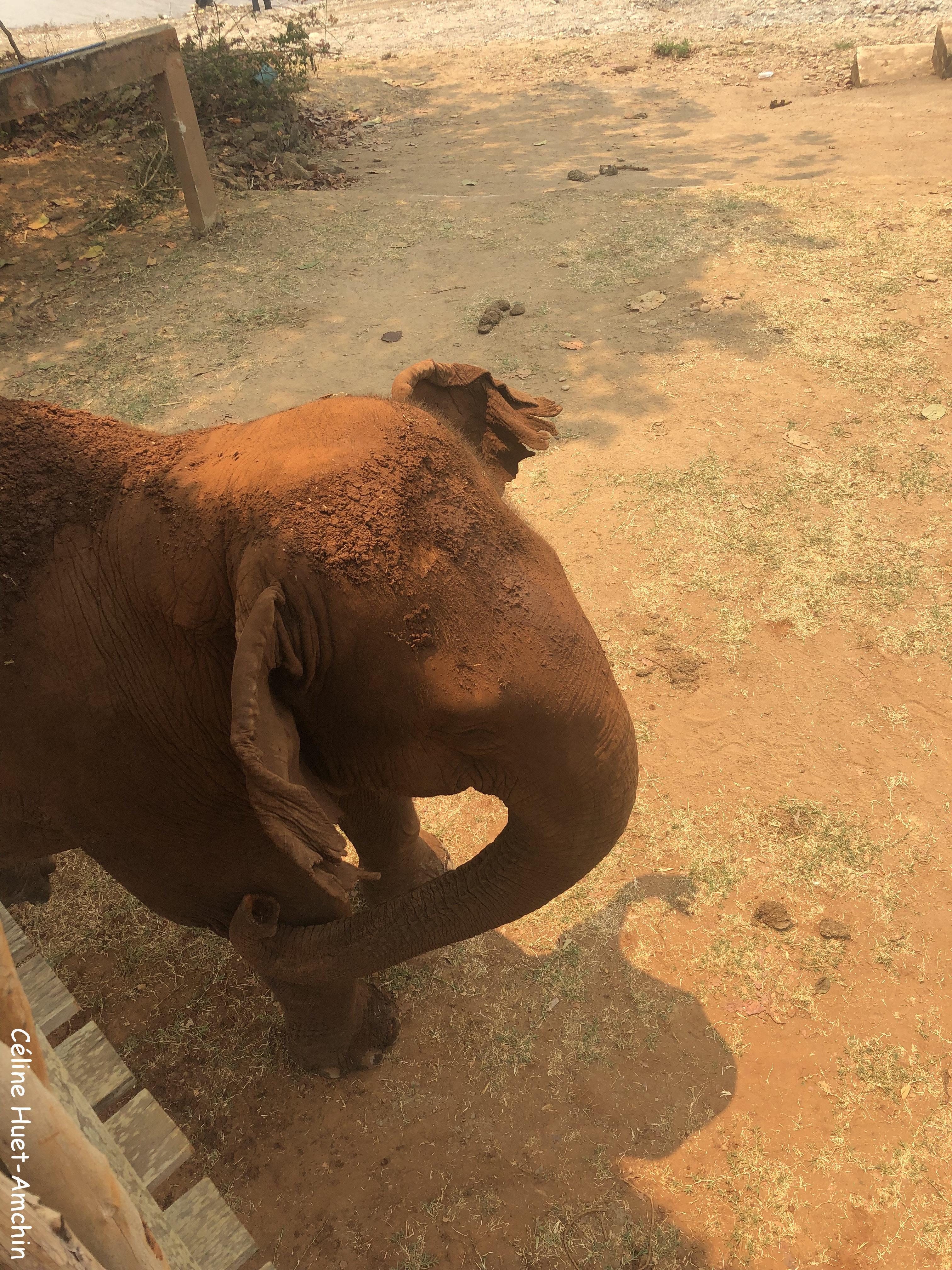 Elephant Nature Park Chiang Mai Thaïlande Asie