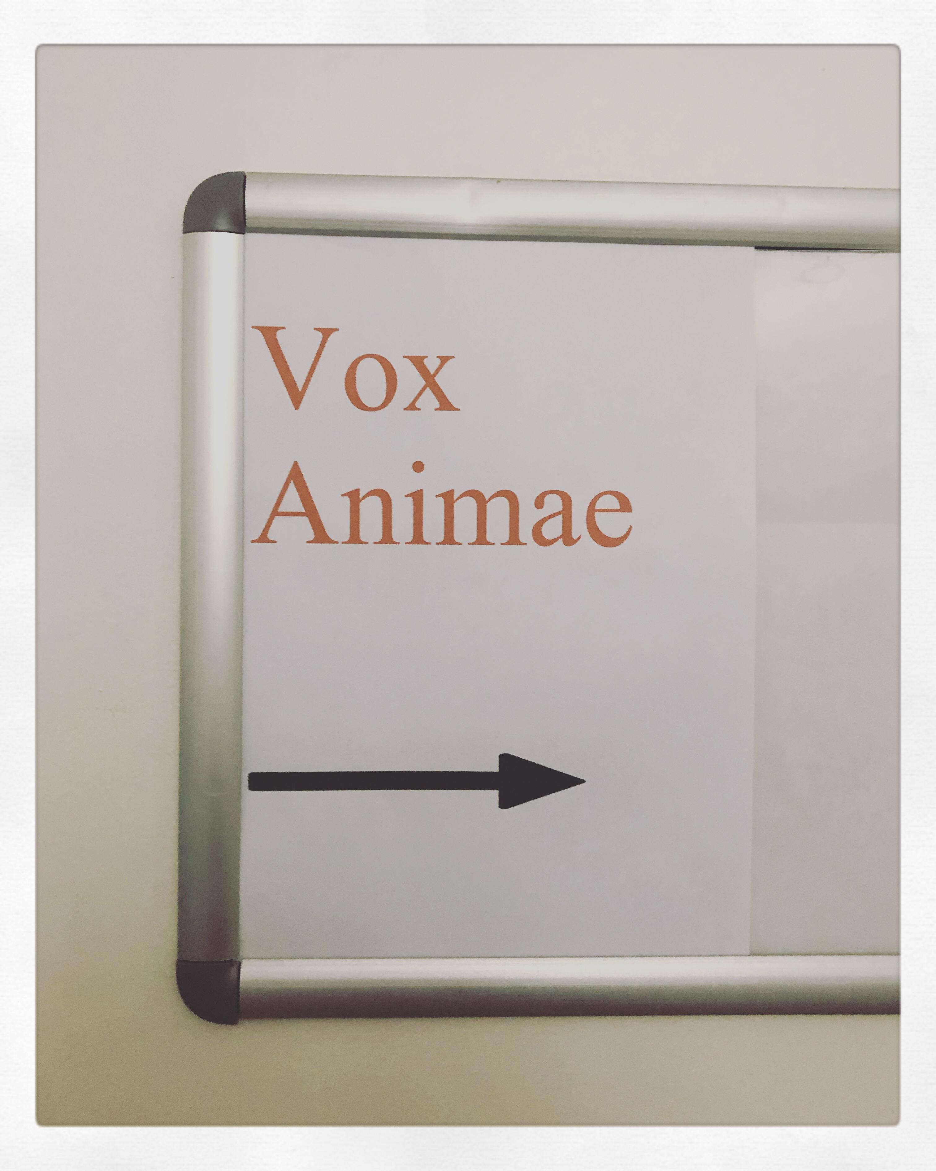 Formation Comportementaliste Félin spécialiste du chat Vox Animae