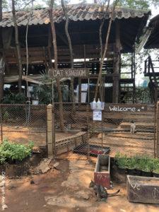 Cat Kingdom Elephant Nature Park Chiang Mai Thaïlande Asie