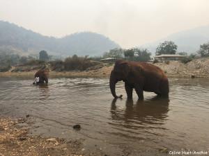 """Jokia """"ma filleule"""" et Sri Pai avec son mahout Elephant Nature Park Chiang Mai Thaïlande Asie"""
