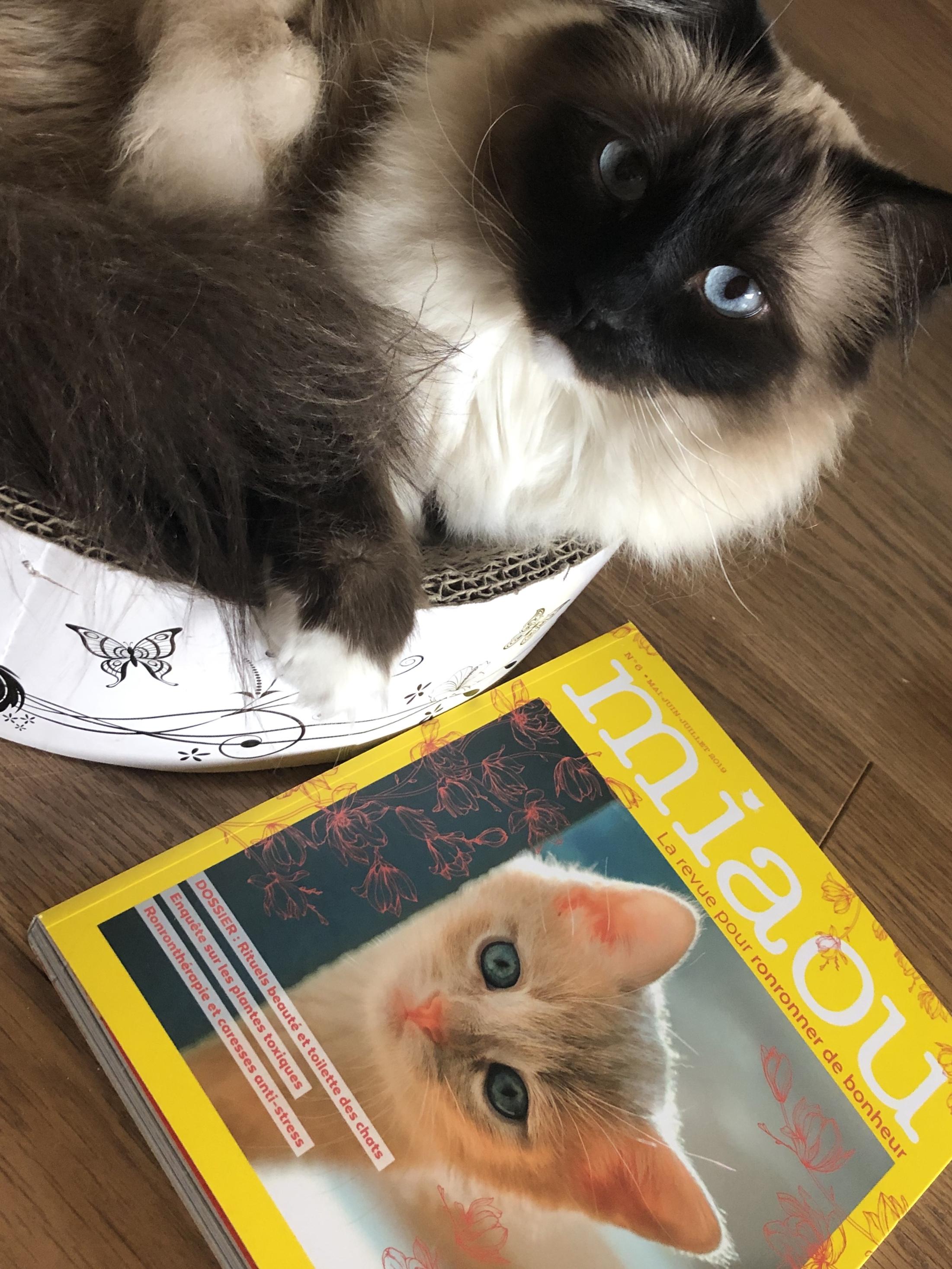 Concours : un exemplaire de Miaou la revue n° 6 à gagner !
