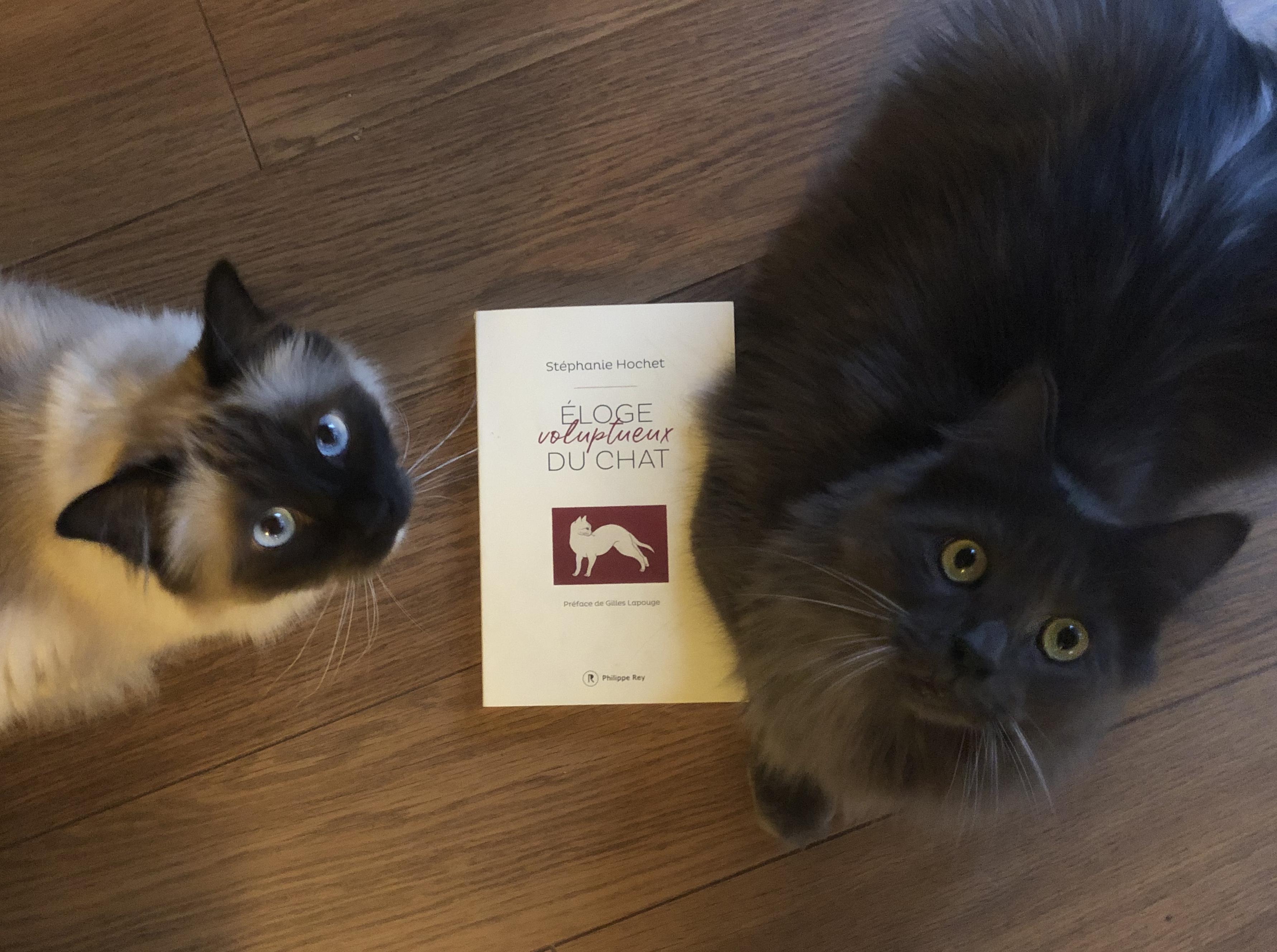 """""""Éloge voluptueux du chat"""" de Stéphanie Hochet..."""