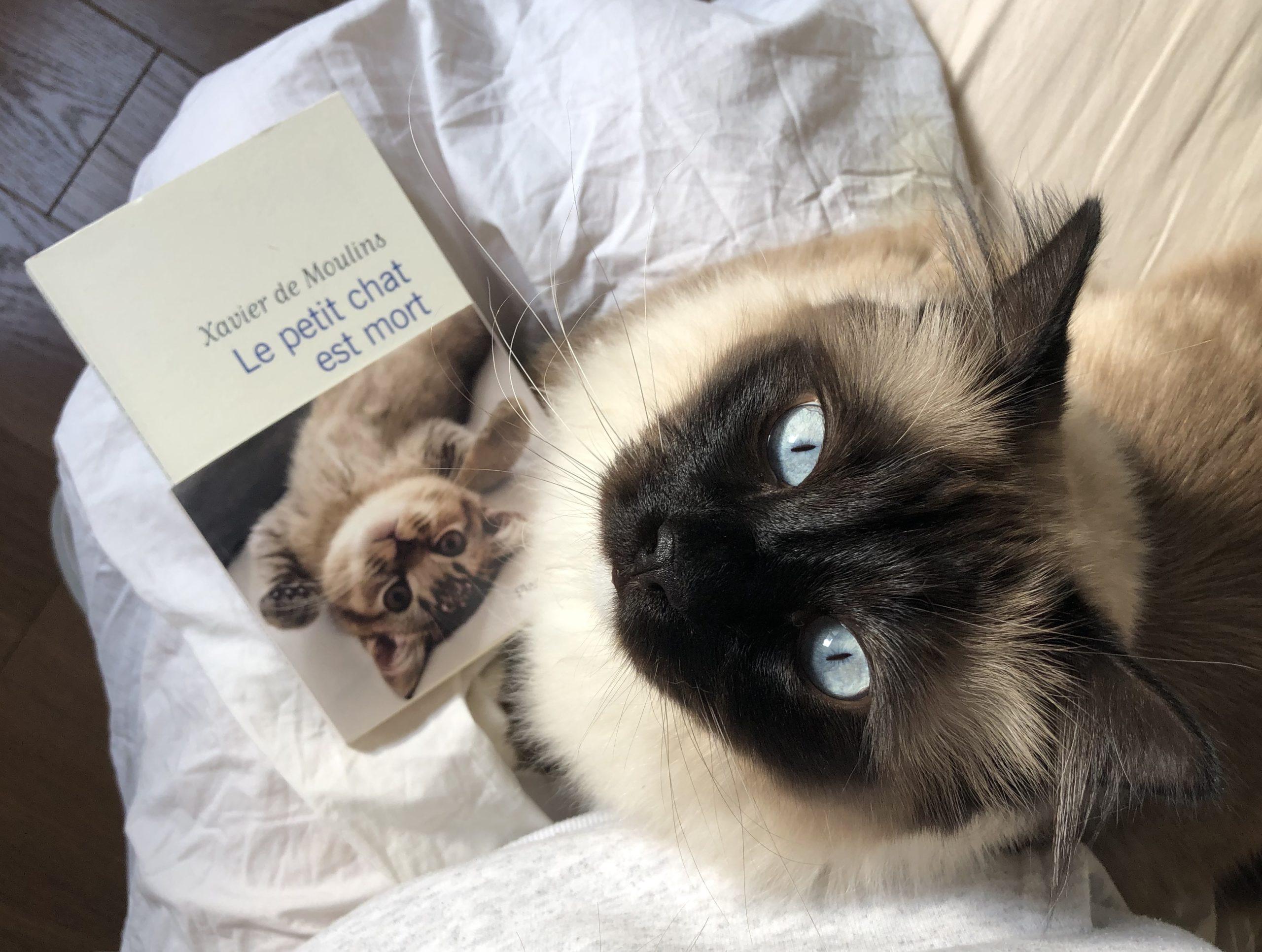 """""""Le petit chat est mort"""" de Xaviers de Moulins..."""